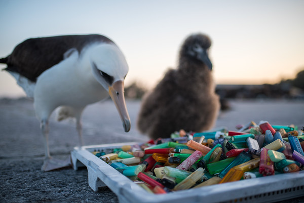 A Curious Albatross