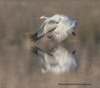 Feathery Reflection