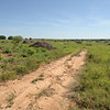Mesquite and Red Cedar grubbed and raked on Walking M Ranch in Baylor County near Seymour, Texas.