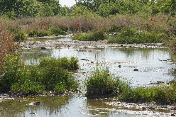 A rancher can utilize a riparian buffer in order to provide clean water and lush vegetation during select grazing periods.