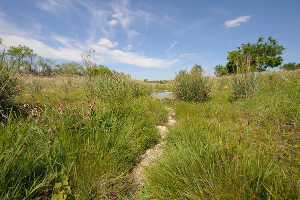 A riparian buffer offers a filtration system that is generated by mother nature. Plants work together to filtrate out pollutants that could make it into the water flow.