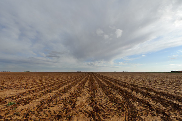 "A ""sand fighter"" implement has been used on this field to help prevent wind erosion and protect emerging cotton seedlings in Lynn County, Texas."