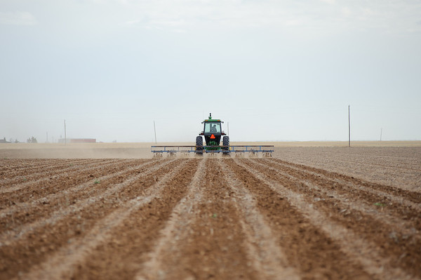 "A tractor is pulling an implement called a ""sand fighter"" to help the soil form dirt clods to prevent erosion and protect emerging cotton seedlings. This practice is primarily done on continuous cotton fields to keep the top soil from blowing away and damaging young cotton -- Lynn County, Texas."