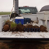 The back end of a soil scientists pickup with tools for determining soil types, which is an important part of conservation planning.