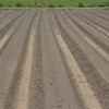 The beginning of seed plots for planting at the NRCS PMc in Knox City, Texas.