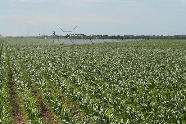Brazos County, Texas irrigated cropland.