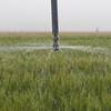 Center-pivot sprinklers are one of the irrigation systems for cropland in Munday, Texas.