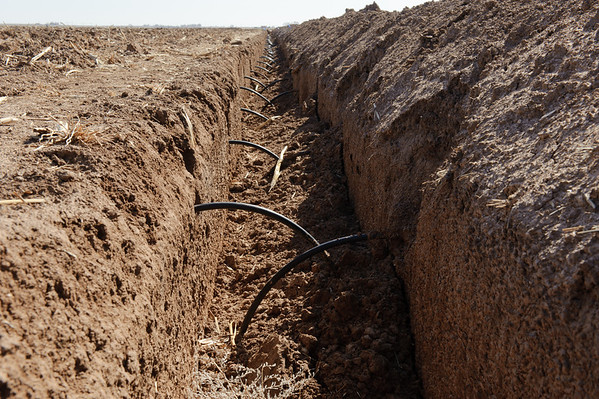 Blake Davis Farms in Lamb County near Littlefield, Texas. Open ditch with black tubing that will be tied into PVC pipe for sub surface drip irrigation system.
