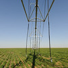 Center pivot sprinkler irrigation system located on a winter wheat cover crop in Morton, Texas