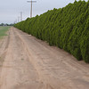 Windbreaks help prevent wind erosion at the NRCS PMC in Knox City, Texas.