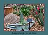 Aloe #03-2011H 00a<br /> <br /> Karasburg Coral Aloe (sic), Aloe Karasbergensis. <br /> Family:  Asphodelaceae.<br /> <br /> March 1, 2012<br /> Hidden Lake Gardens Conservatory, Arid Dome.<br /> (Canon 50D)