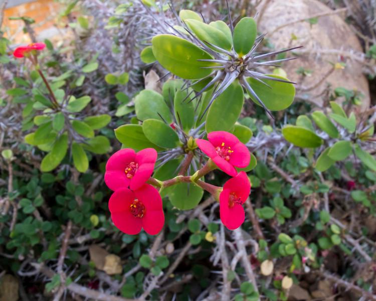 Arid House Plant Catalogs