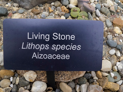Lithops ID label and pointer to new lithops gallery