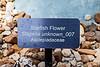 Plant ID label - Starfish Flower