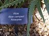 Aloe camperi plant label