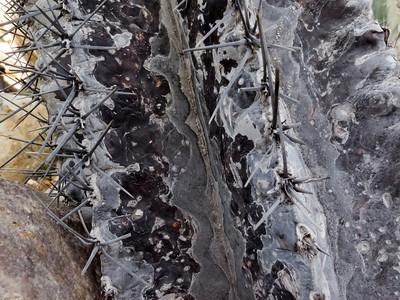 Sampler - Cactus blooms and spine details