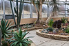 General views inside the Arid Dome (s03)<br /> <br /> Hidden Lake Gardens Conservatory<br /> March 1, 2012<br /> (Canon 50D)