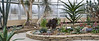 General views inside the Arid Dome (panorama A2)<br /> <br /> Hidden Lake Gardens Conservatory<br /> March 1, 2012<br /> (Canon 50D)<br /> 2 shot panorama