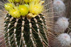 Blooming unidentified cactus.  I was shooting 'blind' on this one, holding the camera out and aiming it by lens orientation relative to the subject.  I didn't do a very good job, did I?