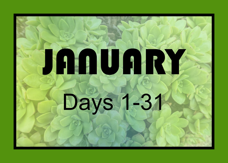 January marker for xeric plant blooms through the year