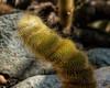 2017-04-07  Cactus or caterpillar?