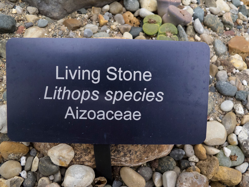 Lithops ID label
