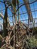 Didiereaceae:  Alluaudia procera<br /> 2011M 03<br /> <br /> Alluaudia or Madagascar Ocotillo.  Alluaudia procera.<br /> Family:  Didiereaceae<br /> <br /> <br /> Matthaei Botanical Gardens Conservatory,<br /> Arid House,<br /> Ann Arbor, Michigan,<br /> February 2011