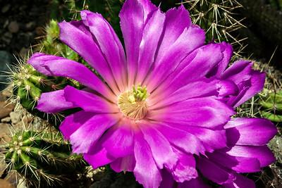 Hot Shots #1 - Desert Plants
