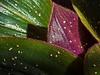 Brown spiderwort leaf detail with sparkles
