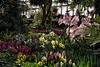 D071-2015  Spring floral display<br /> <br /> Temperate Dome, Conservatory, Hidden Lake Gardens, Michigan<br /> Taken March 12, 2015; edited 2017
