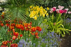 Spring bulb display at the Conservatory