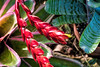 Bromeliad color goes beyond the blooms