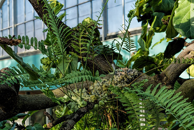 Humid etc - Ferns and Mosses in the conservatory