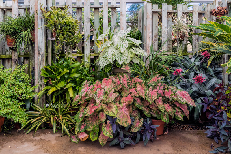 Mixed foliage plants, Temperate House