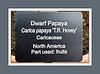 Caricaceae:  Carica papaya 'T. R. Hovey'<br /> 2000M 00<br /> <br /> Carica papaya 'T. R. Hovey', Dwarf Papaya<br /> Native to North America<br /> <br /> Matthaei Botanical Gardens Conservatory<br /> February 22, 2012<br /> (Sony nex-5)
