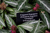 Plant ID label for Dracaena fragrans