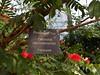 Powderpuff Tree plant label