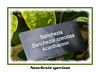Plant label - Sanchezia speciosa