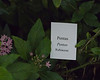 Plant ID label for pink pentas