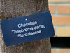 Plant ID label:  Cacao or Chocolate tree