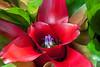 Bromeliad blooms