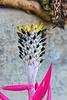 Bromeliad bloom spike
