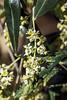 A Profusion of Pollen