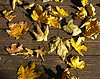 Leaves on a Deck
