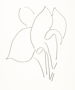 Plant Series, 2014, ink on paper, 14 x 11 inches