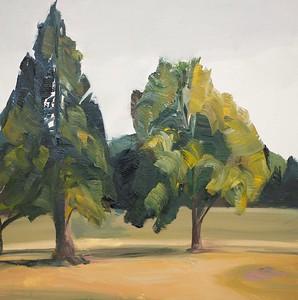 Tree Portrait 4