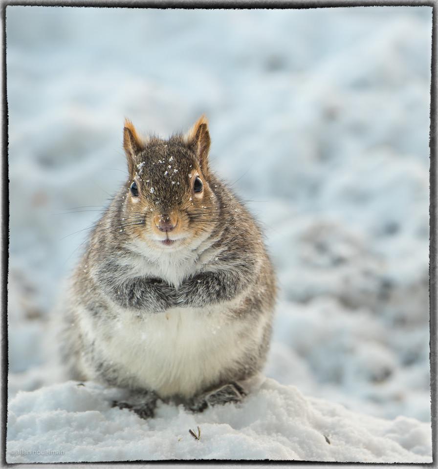 Fat Squirrel Under the Bird Feeder