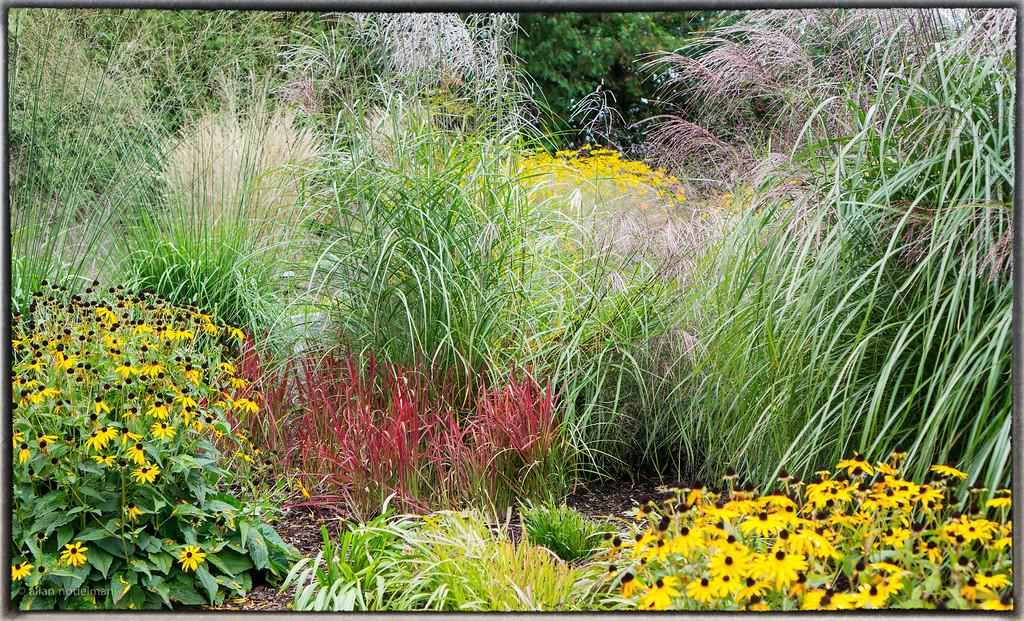 Mature September Garden
