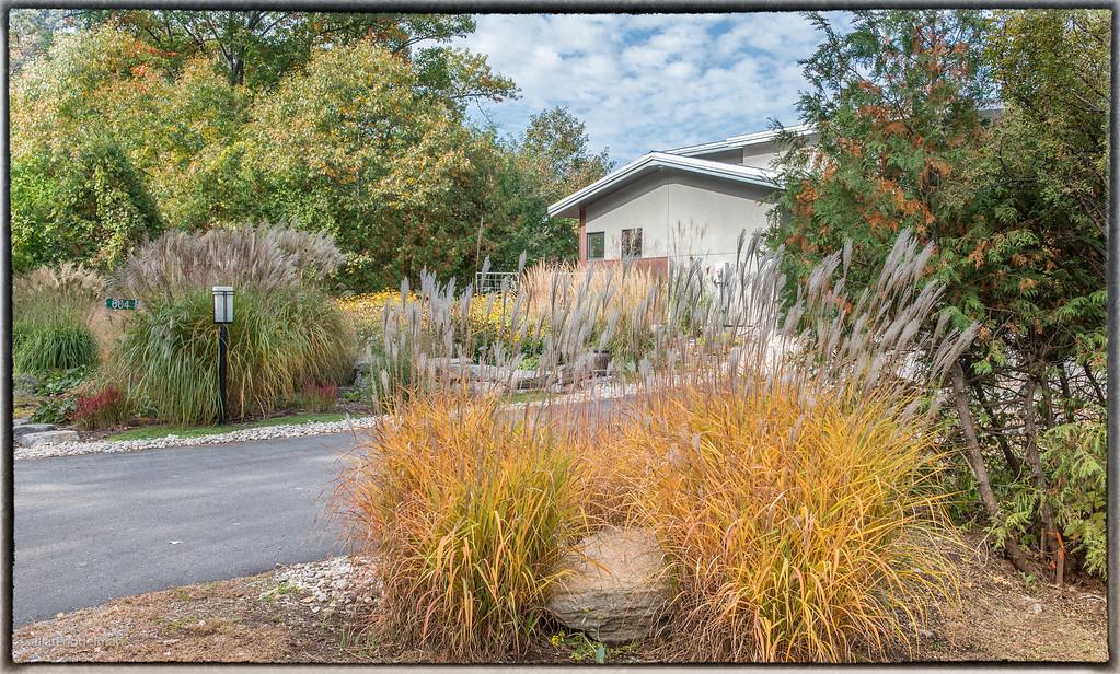Autumn Garden October 2015