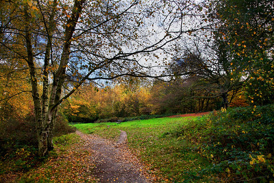 "Hampstead Heath (""The Heath""), London, England."